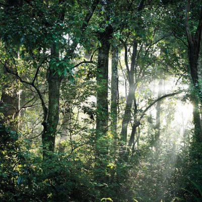 jungle1-1600
