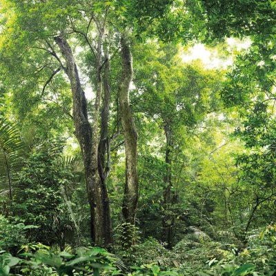 jungle3-1600